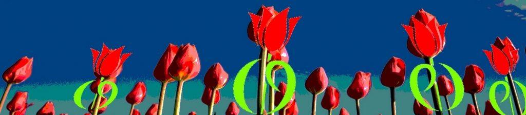 tulpen flyer